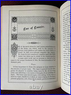 Antique Victorian Book Treasures Of Use And Beauty 1883 Original